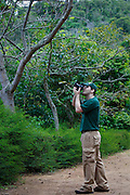 Juiz de Fora_MG, Brasil...Fotografo que fotografa e reune fotos de  aves e informacoes sobre 1500 das 1800 especies brasileiras, Wikiaves, em Juiz de Fora, Minas Gerais...Photographer who shoots pictures of birds and gather information on 1500 and 1800 Brazilian species, Wikiaves, em Juiz de Fora, Minas Gerais..Foto: BRUNO MAGALHAES / NITRO