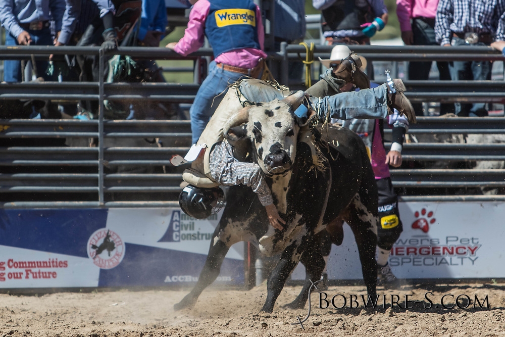Bull rider Jacob Hanks has a rough ride on Salt River Rodeo's B4 Third Wheel in the first performance of the Elizabeth Stampede on Saturday, June 2, 2018.
