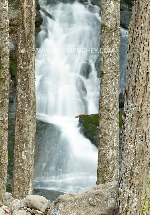 Mamakating, New York  - Tree trunks frame a waterfall in the Bashakill Wildlife Management Area on March 4, 2012.