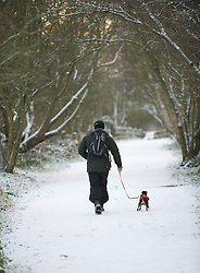 © Licensed to London News Pictures. 05/12/2012..Yorkshire and Cleveland, England..A dog walker sets off through the woods as overnight snow fall brings the first signs of the wintery weather that is forecast for the rest of this week to North Yorkshire...Photo credit : Ian Forsyth/LNP