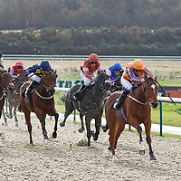 Lingfield 31st October 2012