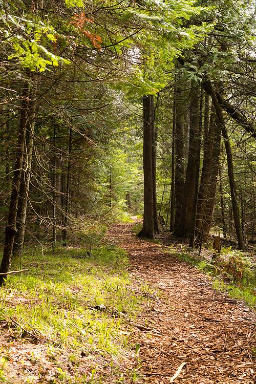 Path through cedar trees; The Ridges Sanctuary, Baileys Harbor, Wisconsin.