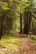 Path through cedar trees; The Ridges Sanctuary, Baileys Harbor, Wisconsin.