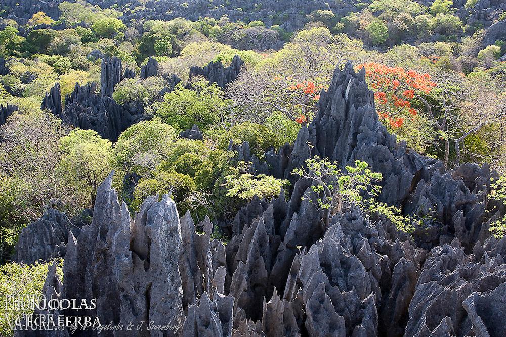 Tsingy de l'Ankarana, Madagascar