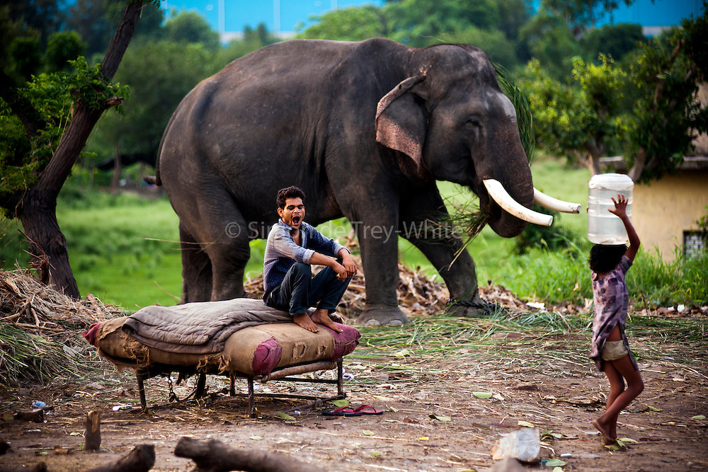 13th August 2014, Yamuna River, New Delhi, India. An elephant handler yawns in the early morning as he guards an elephant near a bridge over the Yamuna River, New Delhi, India on the 13th August 2014<br />