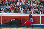 Professional bullfighter Oscar Higares guides his first bull of the day as it charges past his body at full speed at the annual village festival of San Juan in Campos del Rio, near Murcia in southern Spain.  (Oscar Higares is featured in the book What I Eat: Around the World in 80 Diets.) After a dozen more passes, he kills the bull on his first attempt, eliciting a standing ovation from the crowd, which awards him the bull's ears and tail. Oscar and the bull spend just under 15 minutes together in the ring (an anxious period in which Oscar must control not only the objective dangers, but also his fear).  Each bullfight ends with the killing of the bull by the matador (bullfighter). MODEL RELEASED.