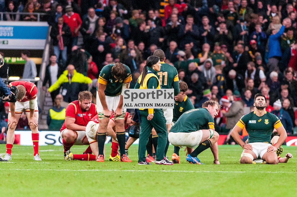 South African players celebrate at the final whistle. Action from the South Africa v Wales quarter final game at the 2015 Rugby World Cup at Twickenham in London, 17 October 2015. (c) Paul J Roberts / Sportpix.org.uk