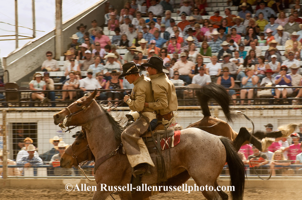 Pickup man Jay Shaw picks up saddle bronc rider, Miles City Bucking Horse Sale, Montana