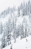 Skier alone on a steep slope in the trees, Stevens Pass, Central Cascades, Washington State