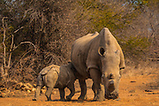 Available as a print in various sizes or image download for either personal or commercial use.<br />