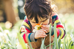 Baby Girl Smelling Daffodil in Garden, Close-up view