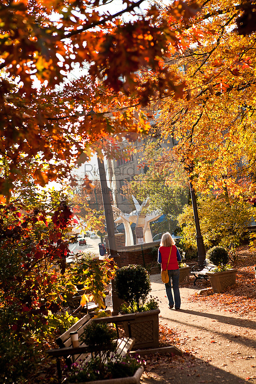 Autumn leaves in Pritchard Park in Asheville, NC.
