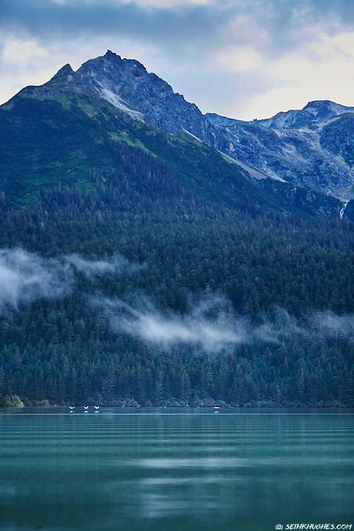Birds fly across Chilkoot Lake near Haines, Alaska.