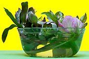 little flower plant almost submerged in a little glass jar