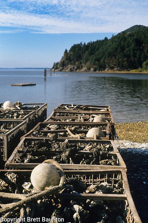 Chuckanut Mountains, Bellingham Bay, Taylor Shelfish Oysters, Washington