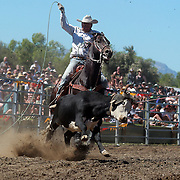 Graeme Causer from Christchurch in action with team mate Graeme Purvis during the Open Team Roping competition at the Wanaka Rodeo. Wanaka, South Island, New Zealand. 2nd January 2012