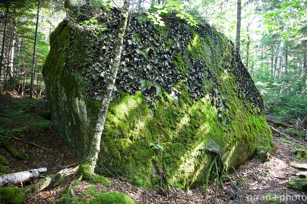 A very odd and large granite boulder covered in moss and a mystery black fungus (???)