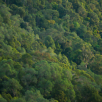 Aerieal view of the canopy, Gunung Silam, Sabah, Malaysia, Borneo, South East Asia.