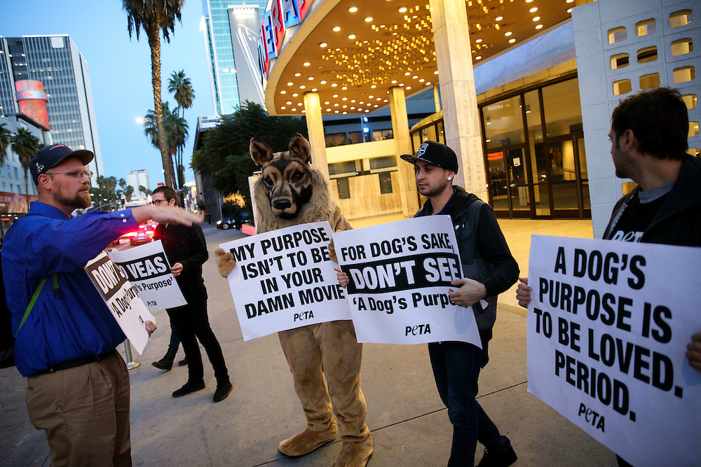 "People hold signs during a PETA protest of the movie ""A Dog's Purpose"" in front of the ArcLight Theatre on Friday, January 27, 2017 in Hollywood, Calif. PETA called for a boycott of the film alleging animal abuse after a video distributed by TMZ showed a German Shepard being forced into a pool of turbulent water. © 2017 Patrick T. Fallon - Restrictions: * LA, OC, Ventura, Riverside, San Diego Area Newspapers And TV Rights OUT *"