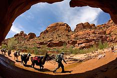 Southern Utah - Canyons & Llamas