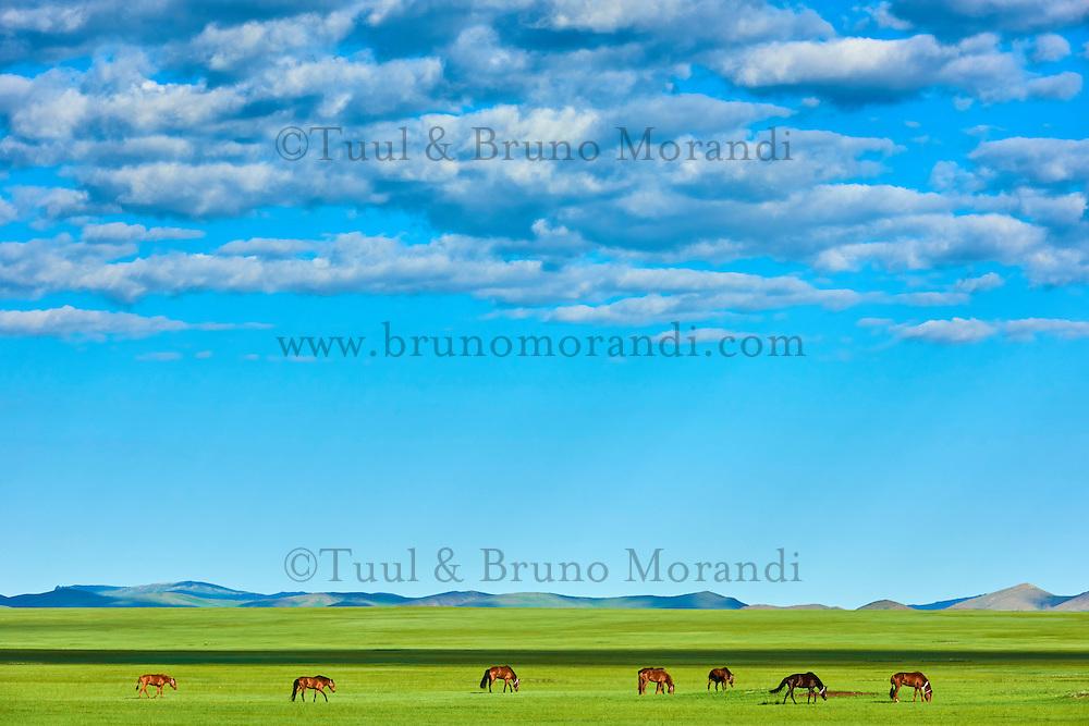 Mongolie, Province de Bayankhongor, troupeau de chevaux dans la steppe // Mongolia, Bayankhongor province, Okhon valley, horse herd in the steppe