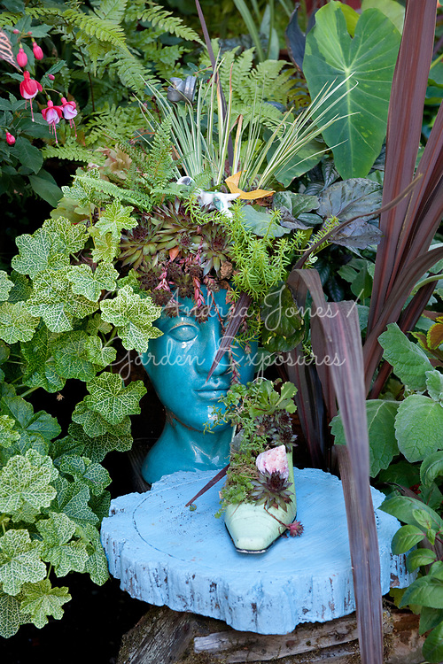 Blue painted plinth with a ceramic show and succulent plants. Blue ceramic head container with succulents and surrounded by foliage<br /> <br /> Nancy Goldman's recycled garden (Nancyland), Portland, OR, USA