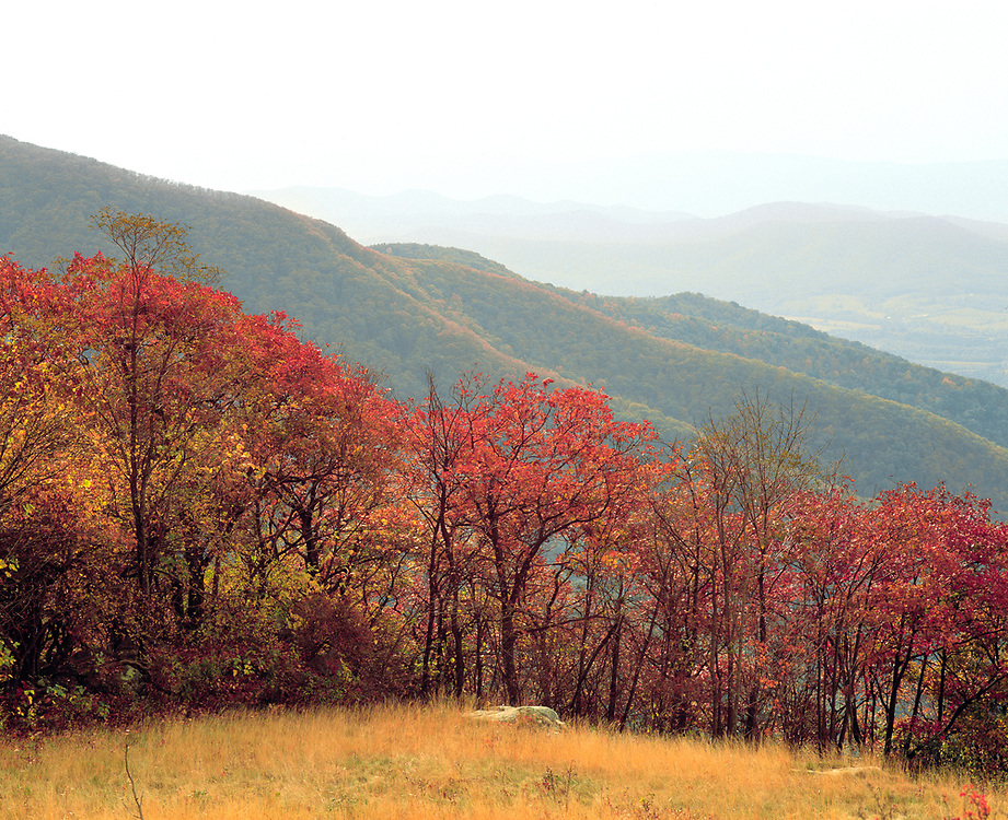 Colorful trees fill Skyline Drive, in Shenandoah National Park, Virginia.