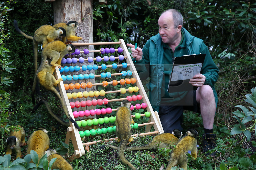 © Licensed to London News Pictures. 03/01/2019. London, UK. A London Zoo keeper with Squirrel Monkeys poses with the counting board during the annual stocktake at London Zoo. London Zoo undertakes its annual stocktaking which is carried out at the the start of each year. Every animal in London Zoo is weighed and measured and the statistics is shared with other Zoos across the world.  Photo credit: Dinendra Haria/LNP