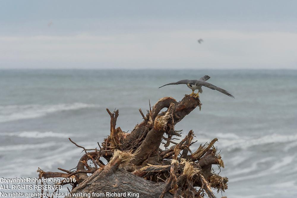 Seaseape photographs Pacific Ocean from Klamath River Estuary, CA