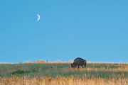 The moon was nice to me today. I like getting the moon in shots with another subject. With wild animals you have to take it when you get it. Missoula Photographer, Missoula Photographers, Montana Pictures, Montana Photos, Photos of Montana