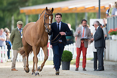 First Horse Inspection Luhmuhlen 2016