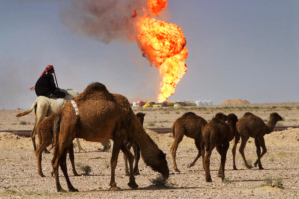Bedouin camel herders and their flock with an oil well fire blazing in the background.  Hundreds of camels graze around the fire in the Rumaila field being worked on by Boots and Coots. The Rumaila field is one of Iraq's biggest oil fields with five billion barrels in reserve. Many of the wells are 10,000 feet deep and produce huge volumes of oil and gas under tremendous pressure, which makes capping them very difficult and dangerous. Rumaila is also spelled Rumeilah.