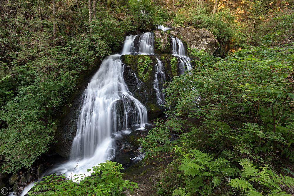 Lush plant growth and Steelhead Falls near the Reservoir Trail in the Hayward Lake Recreational Area in Mission, British Columbia, Canada