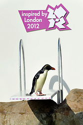 © Licensed to London News Pictures. 29/03/2012. London, UK. Penguins discover a new diving board in their enclosure at London Zoo today 29 March 2012. The board has been granted the 'Inspire Mark' by the London 2012 Inspire programme which recognises ideas inspired by the Olympic Games. Photo credit : Stephen SImpson/LNP