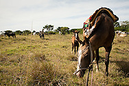 Cowboys checking the herd in the fields in the Bolivian Amazon.