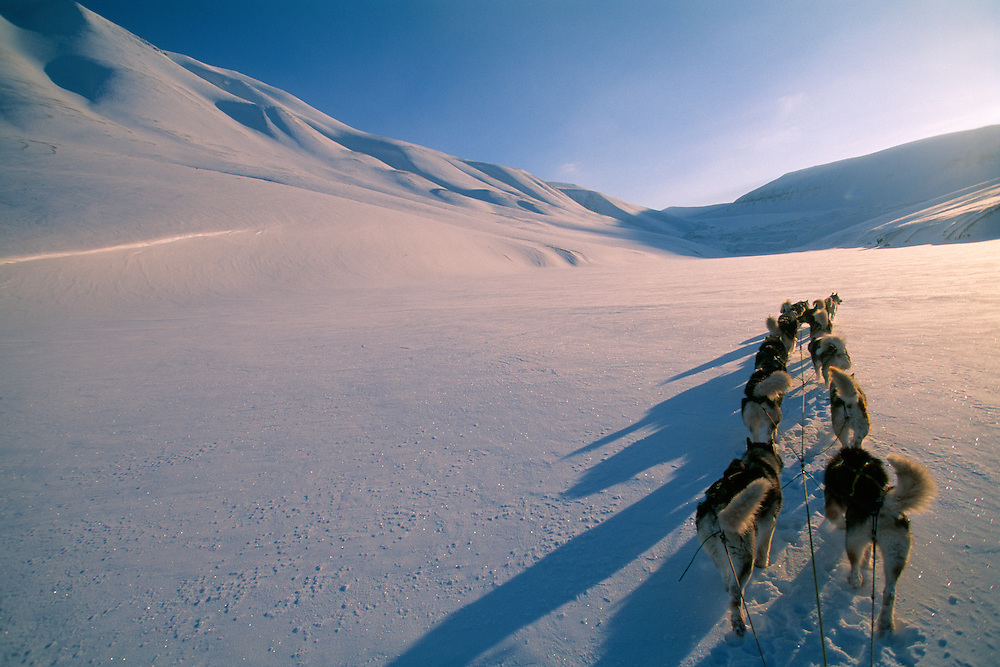 Dog sledding, ecotourism, Svalbard/ Spitsbergen, Norway