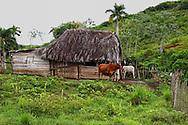 Farm in Las Tres Palmas, Pinar del Rio, Cuba.