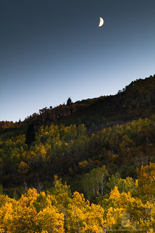 Moonlight and streaks of light upon golden aspen leaves during a cresent moon.
