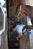 Roma, 16/07/2007: le stalle del Campo Boario - horses stables