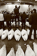 Mar 4, 2006; Tokyo, JPN; Tsukiji.Frozen tuna being auctioned off at the Tsukiji Fish Market...After tuna is caught, it is flash frozen at sea to keep it fresh until it is brought to the market to be sold...Photo credit: Darrell Miho