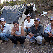 DEL MAR, CALIFORNIA  8/20/04--Undocumented migrant workers, from Oaxaca, Mexico, at their campsite where they live in the canyons and hills surrounding Del Mar.  The shelters are made of tarps and garbage bags.  During the day these men line the roads looking for work as day laborers when they earn minimum wage ($6.75) or less.<br />