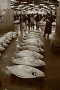 Mar 4, 2006; Tokyo, JPN; Tsukiji.Buyers walk around checking a warehouse full of frozen tuna to be auctioned off at the Tsukiji Fish Market...After tuna is caught, it is flash frozen at sea to keep it fresh until it is brought to the market to be sold...Photo credit: Darrell Miho