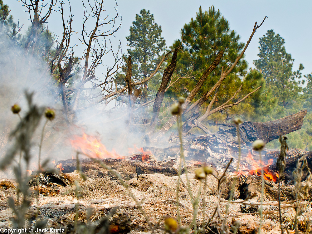 22 JUNE 2010 - FLAGSTAFF, AZ: Logs burn along Highway 89 north of Flagstaff Tuesday, near the line at the Schultz Fire burning north of Flagstaff, AZ. The fire has consumed more than 12,000 acres of forest land and burned within a few feet of homes in some neighborhoods in Flagstaff.   PHOTO BY JACK KURTZ