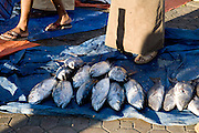 Nizwa, Sultanate of Oman. .February 1st 2009..The fish market of Nizwa