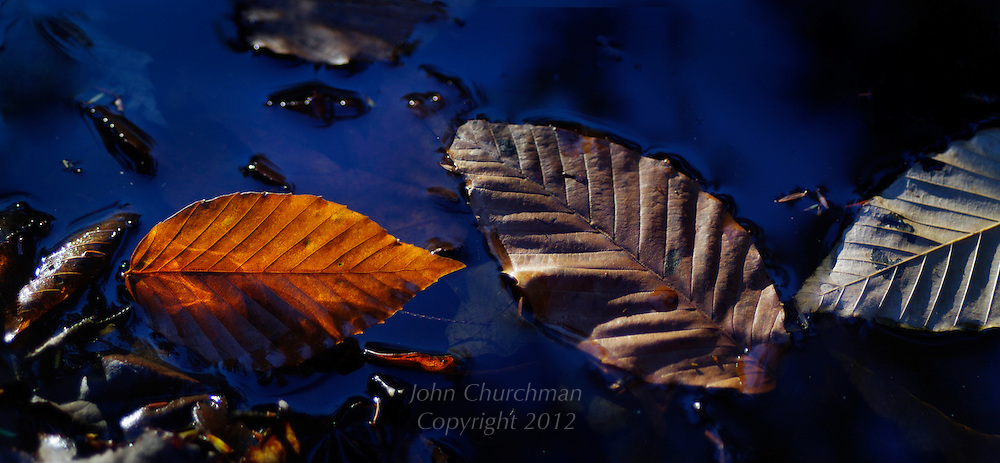 Leaves, reflection, leaf, sky, blue, autumn