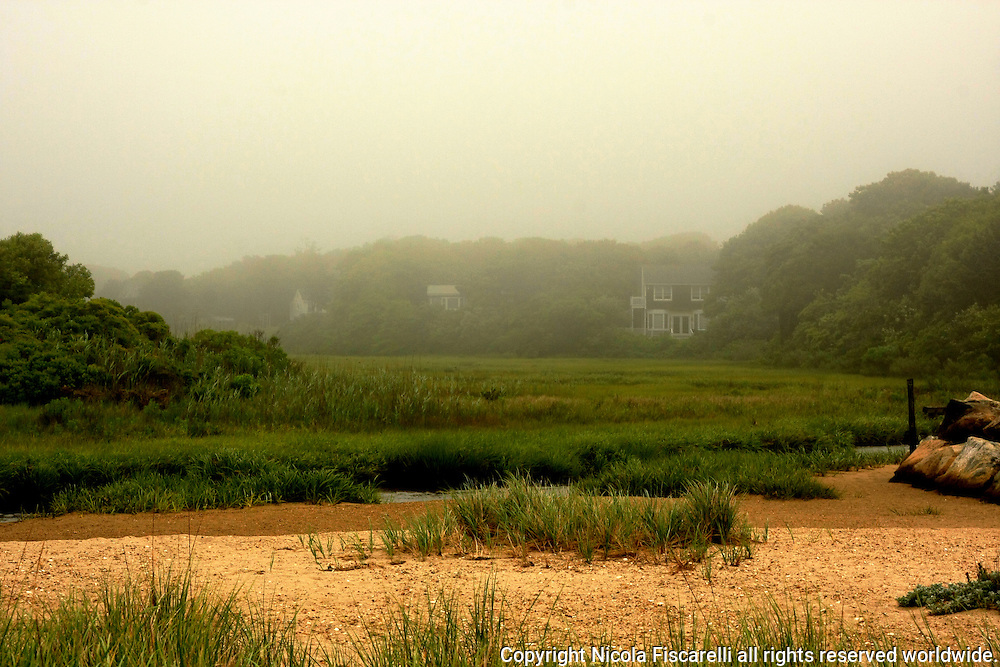 The  morning fog over the Cape Cod marshes.