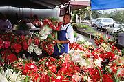 Flower market, anthurium, Hilo, Big Island of Hawaii, Hawaii