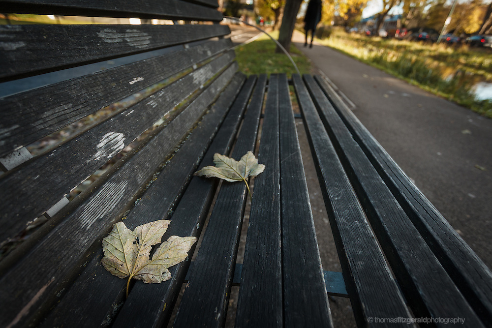 Fallen  Autumn leaves on a bench