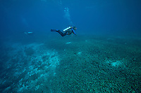 Once thriving coral reef destroyed by fish bombing..Shot In Indonesia