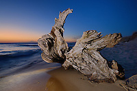 The interesting shapes of old tree roots on the Lake Michigan shore.